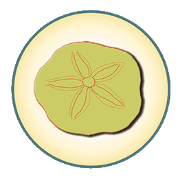Sand Dollar-graphic