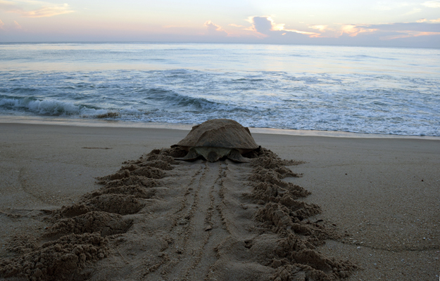 Sea Turtle Beach